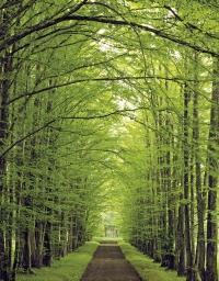 Speciális fakivágás technikát igénylő terület az erdő